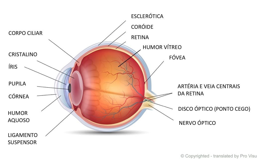 Estruturas do olho