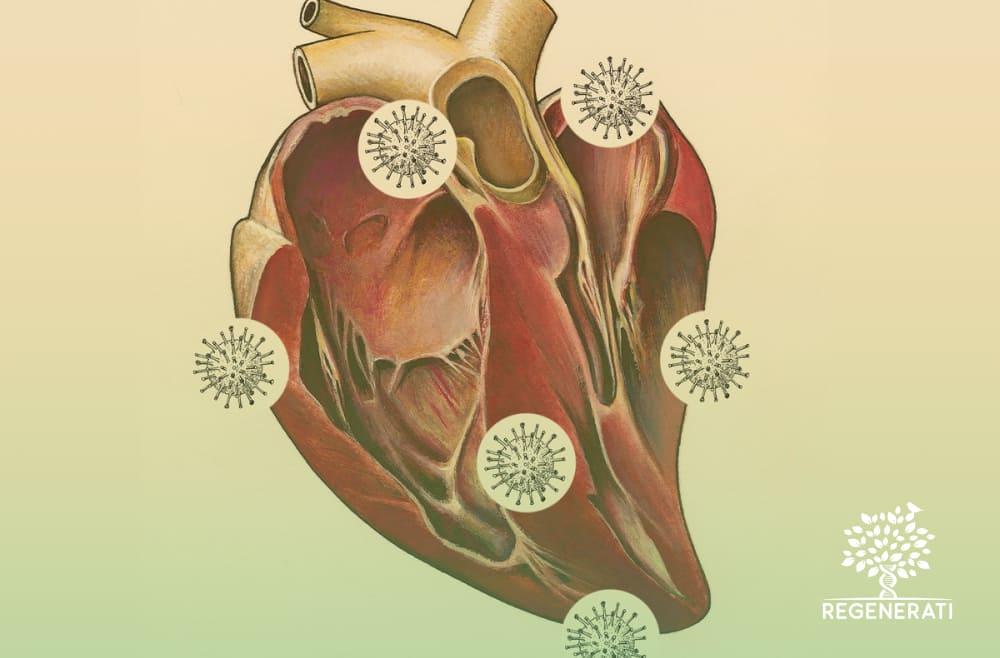 Como o Coronavírus Afeta o Coração
